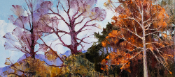 Autumn Trees - Franschhoek Valley | 2019 | Oil on Canvas | 46 x 64 cm