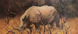 Rhino Study - Kruger Park | 2020 | Oil on Canvas | 30 x 40 cm
