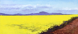 Canola Time In Overberg | 2020 | Oil on Canvas | 18 x 30 cm
