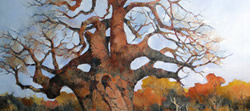 Baobab – Mapunqube Nature Reserve – Limpopo | 2012 | Oil on Canvas | 76 x 115 cm