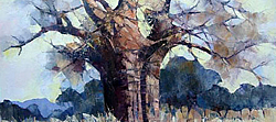 Baobab tree | Oil on Canvas | 64 x 45 cm