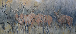 Kudu - Kruger National Park | 2013 | Oil on Canvas | 46 X 64 cm