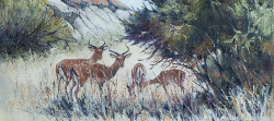 Impalas - Mapungubwe Game Reserve | 2014 | Oil on Canvas | 40 X 55 cm